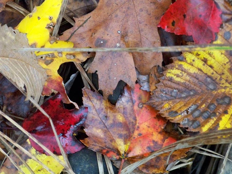 Autumn always leaves... by UmaNHamU