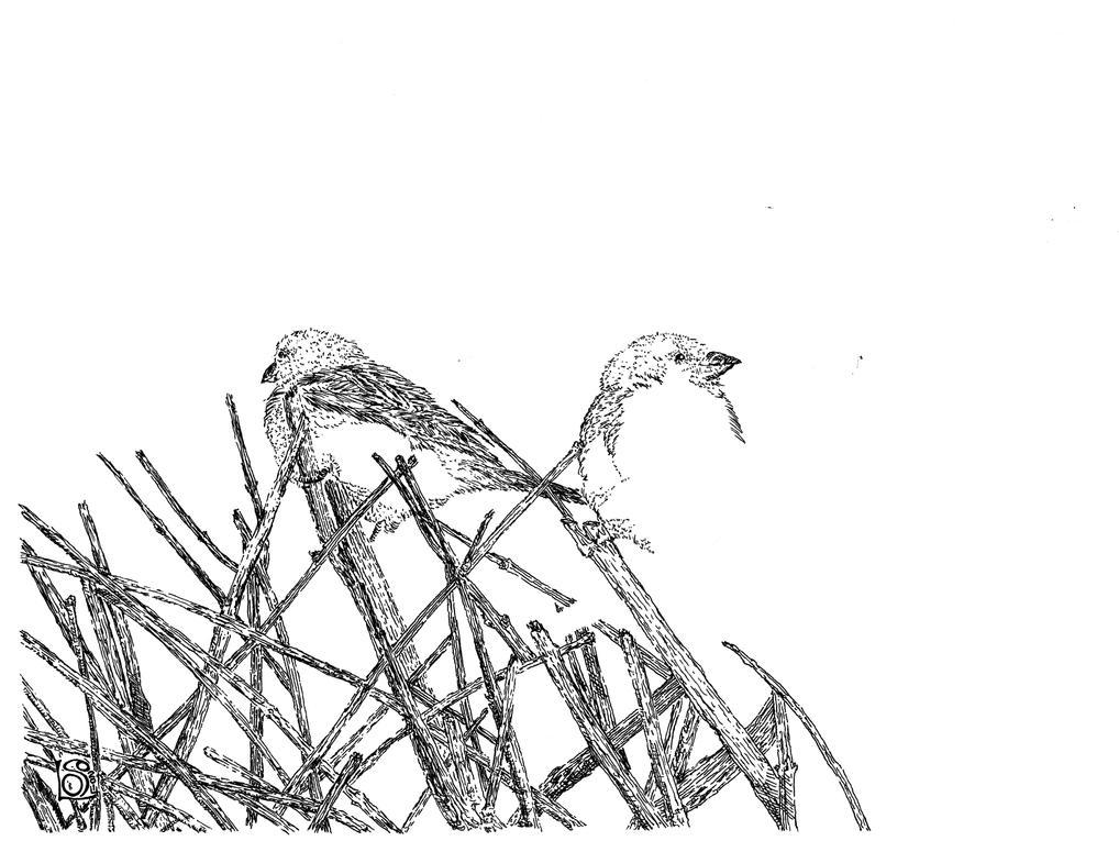 A bird in the hand... WIP by UmaNHamU