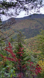 Autumn Colors from Frankenstein Cliff , NH by UmaNHamU