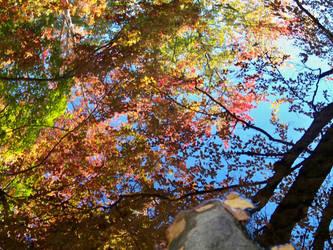 Autumn, upon Reflection... by UmaNHamU