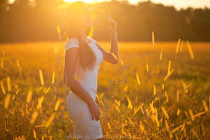 sunset in fields by DenisGoncharov