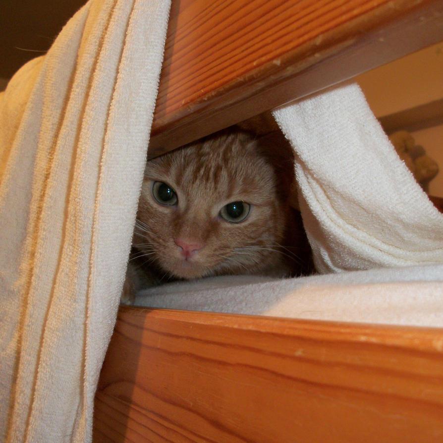 Hidden by Cyrkael