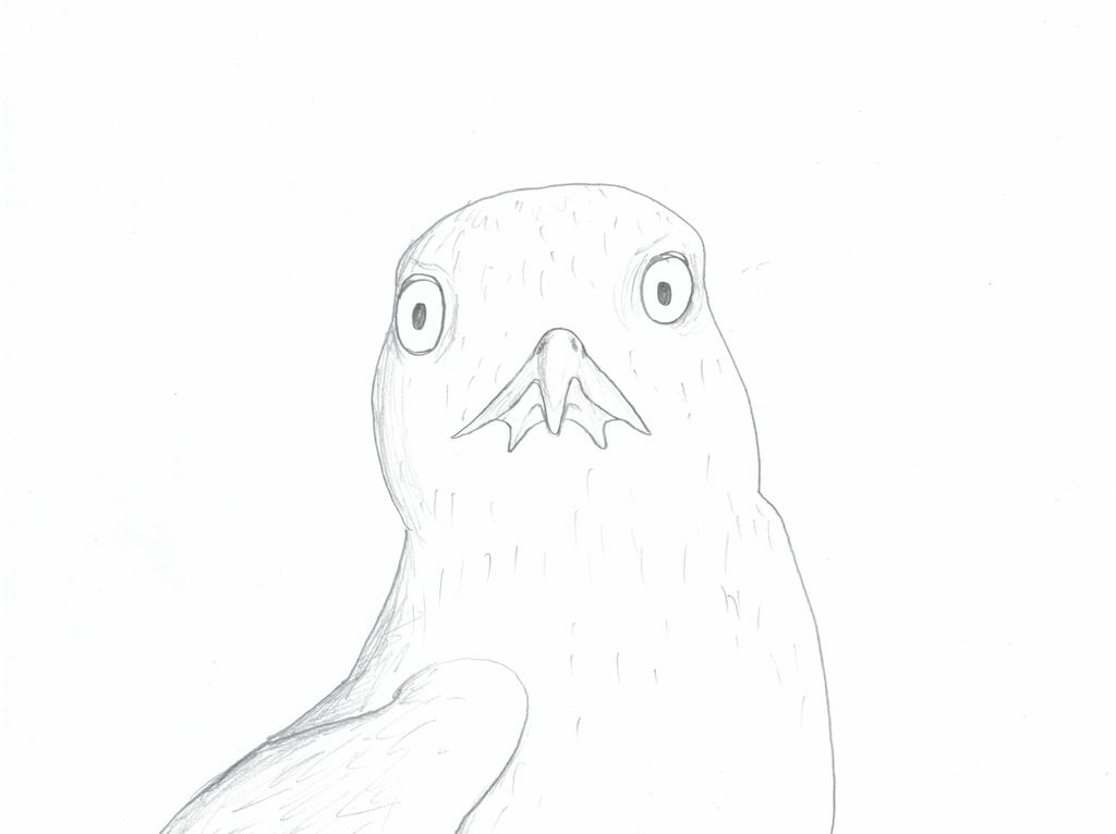 Bird by Ash243x