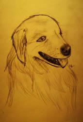 Doggeh