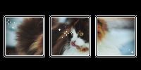 it a cat. -f2u by kittiqui