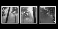 greyscale fog. -f2u by kittiqui