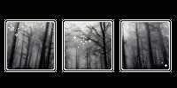 foggy forest. -f2u by kittiqui