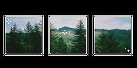 pine trees. -f2u by kittiqui
