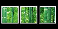 bamboo. -f2u by kittiqui