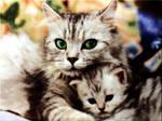 Family cat