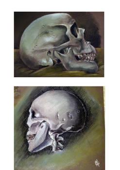 Skull Studys