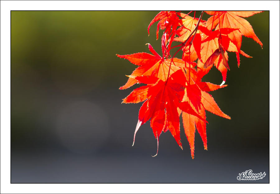 The Latest Colors... by sG-Photographie