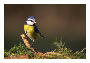Perched on a Tree by sG-Photographie
