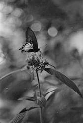 Butterfly by theRealRichard
