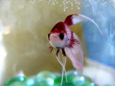 Hello Fishy by Kiwi-chu