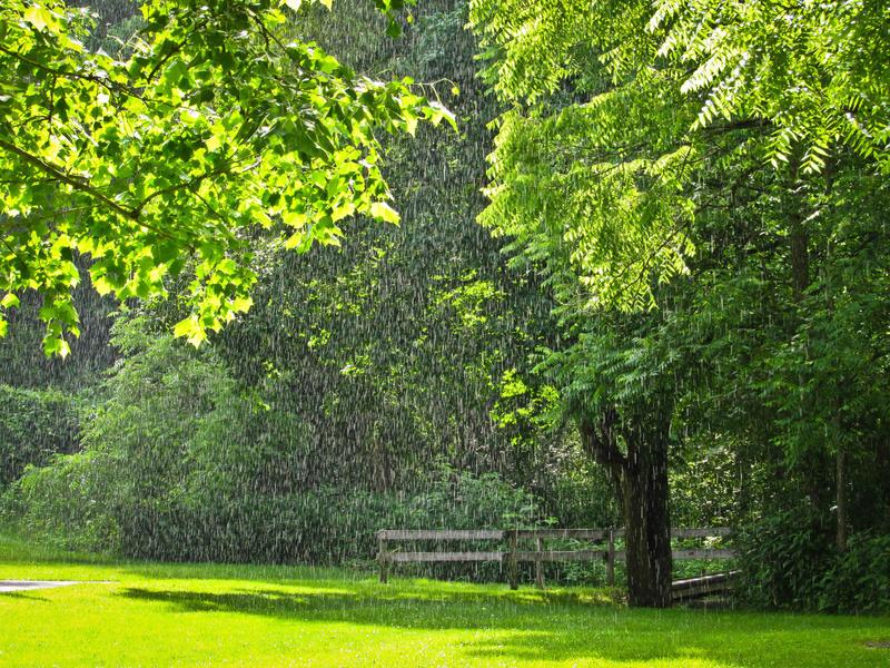 Rain and Sun by Kiwi-chu