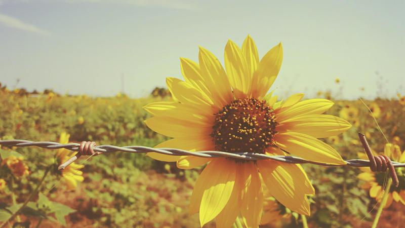 Sunny Love by Kiwi-chu