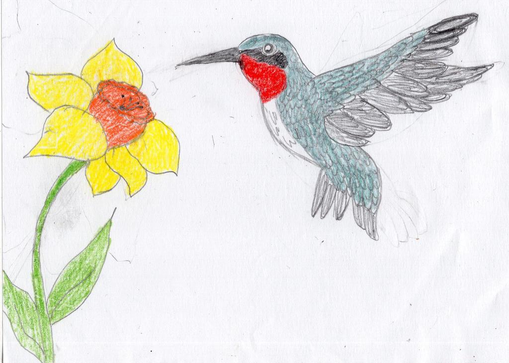 Daffodil and Ruby-throated Hummingbird