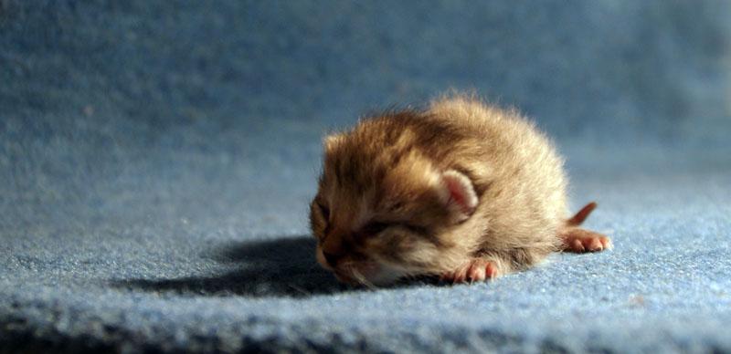 Baby cat by elealafleur on deviantart baby cat by elealafleur thecheapjerseys Images