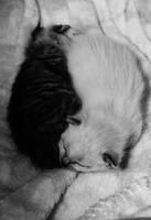 Kitty hug by EleaLaFleur