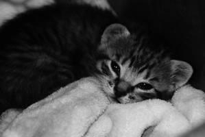 Hi Kitty by EleaLaFleur