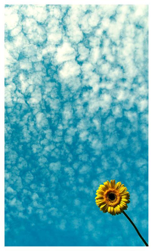 Sky above the flower by guyfromczech