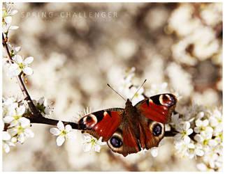 SPRING CHALLENGER 2 by guyfromczech