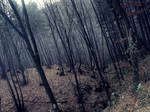 Forestscape II