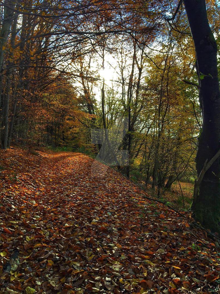 Autumn walk by midvinterdraken