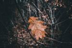 Autumn leaf by midvinterdraken