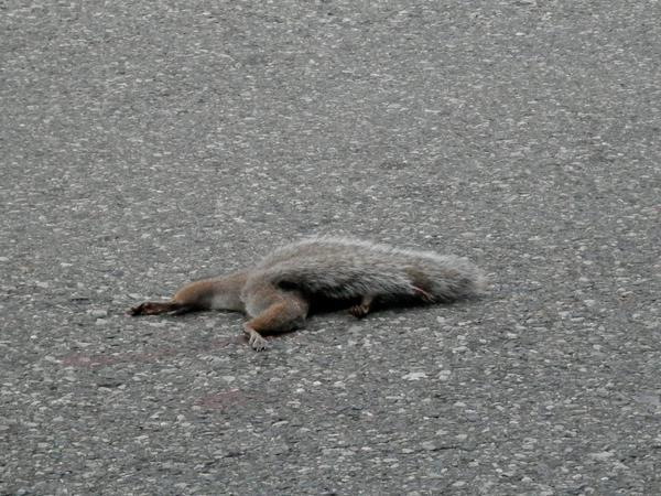 Dead Squirrel - YouTube
