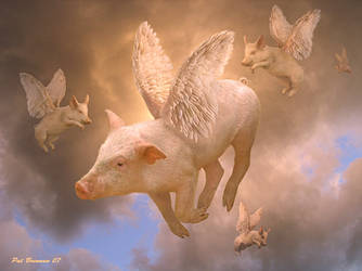 And pigs might fly by patriciabrennan