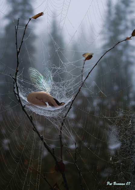 Web safe by patriciabrennan