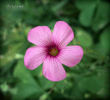 flower 096 by discret