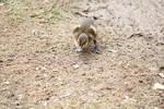 The Littlest Duckling by JVCA