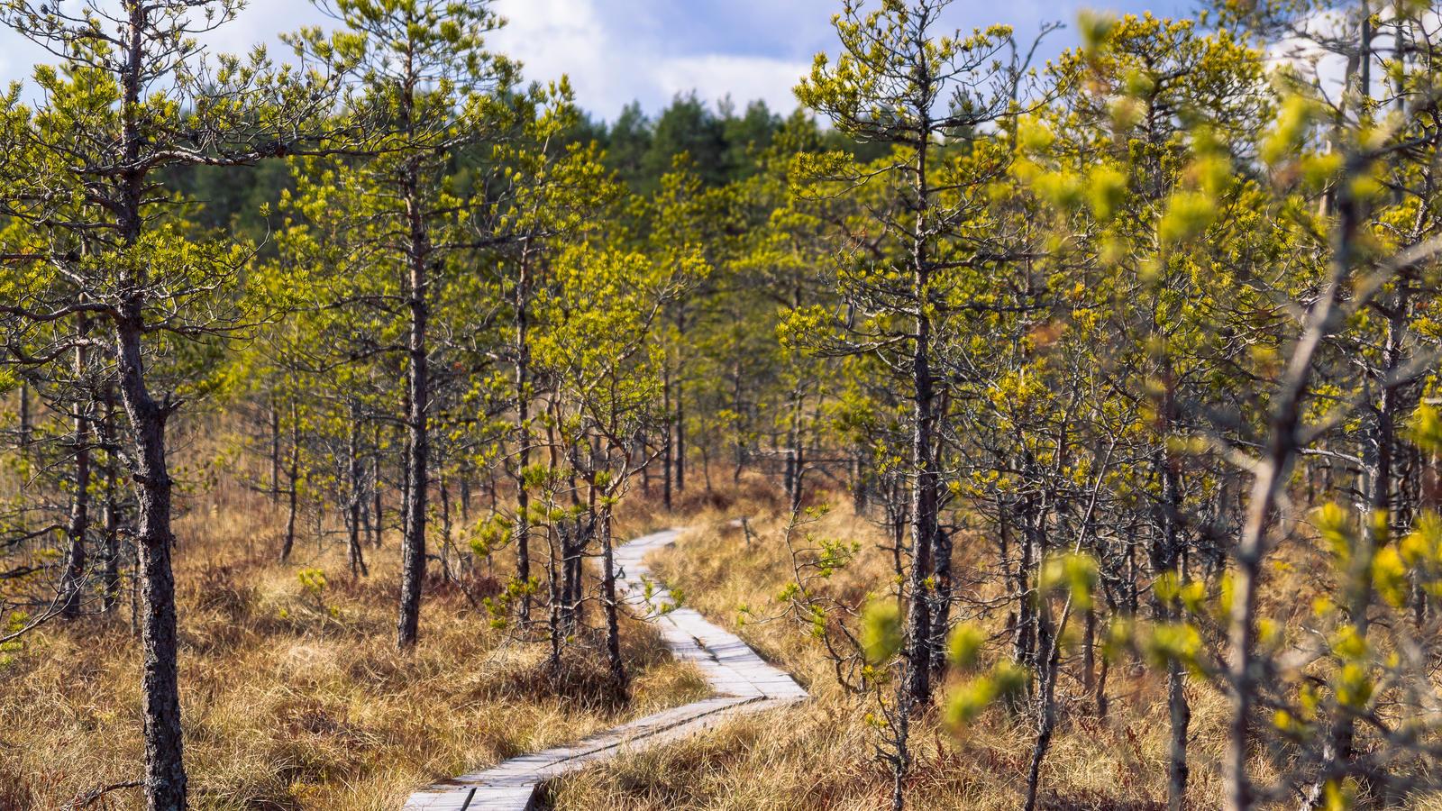 Bog Log Road by sulevlange