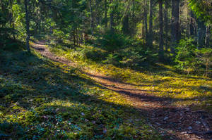 Walk through the woods by sulevlange