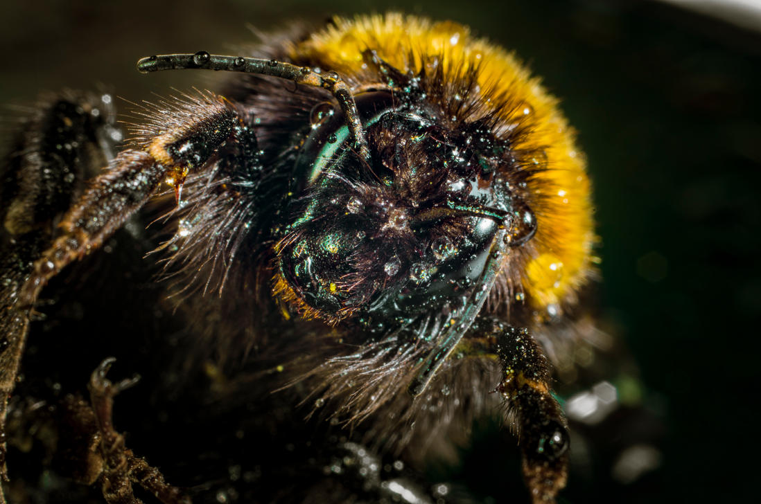 Bee 1 by sulevlange