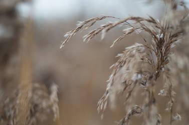 Winter hay by sulevlange
