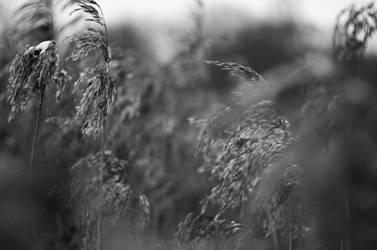 Hay by sulevlange