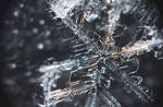 Snowflake #5 January 05, 2019