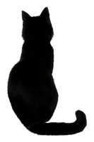 Black Cat Stock I by AnOtherSunrise