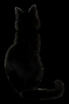 Black Cat Stock I