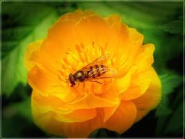 Bee and flower by Hrymmskrymnir