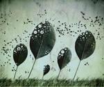 wind by betiti