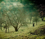 lost in wonderland by betiti