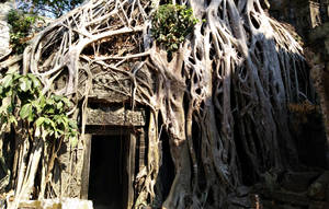 The Mythical Root Gate