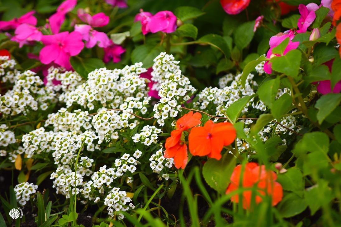 BACKYARD FLOWERS by Crike99