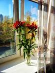 10 Oct Alexandra's red flowers