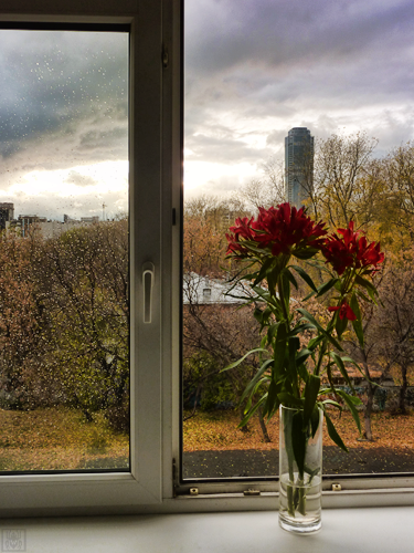 13 Oct Alexandra's red flowers